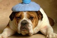 Признаки болезни собаки