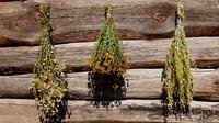 Как правильно сушить травы?
