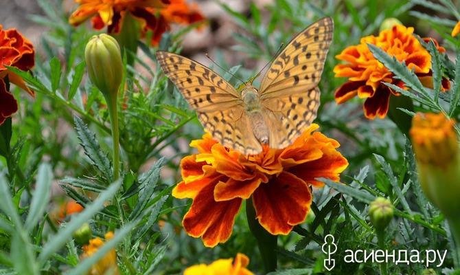 Растения, цветущие все лето