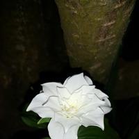 Ночная фотосессия цветника