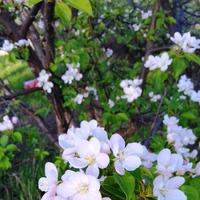 Волшебное время цветения сада