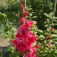 Какие цветы сажаем в мае?