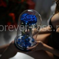 Роза в колбе – вечный подарок Forever-Rose.