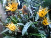 Подскажите, как называются цветы?