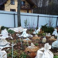 Подготовка растений к зиме