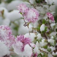 К нам пришла зима-кружевная красота