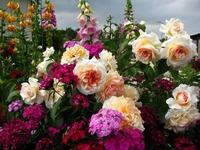 Если тебе по душе красота земная...