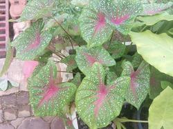 Эффектные листья растений