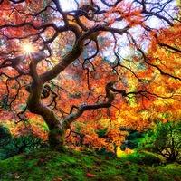 Чувства и сила растений