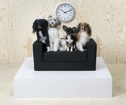 Новинки дизайна для домашних животных