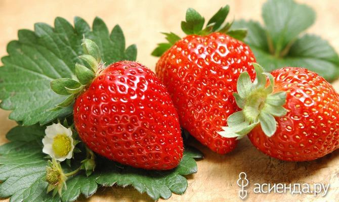 Чем «накормить» клубнику для хорошего урожая