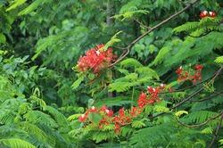 Цветущие растения острова Пхукет
