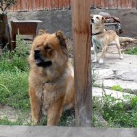 Все любители животных, приглашаются на новый портал Птичка. ру
