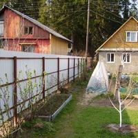 Соседи по даче