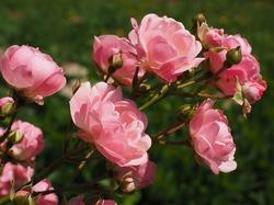 Осенние заботы цветовода