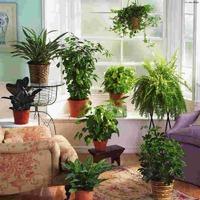 Полезные подкормки для комнатных растений