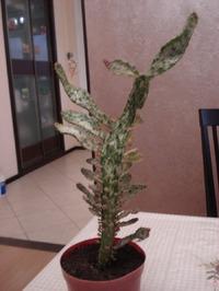 Как называется кактус?