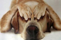 10 способов помочь собаке преодолеть стресс