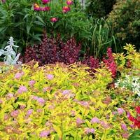 Растения с цветными листьями и наше здоровье
