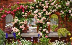 Сажаем розы осенью – инструкция для новичков