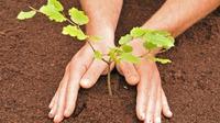 Как правильно сажать деревья?