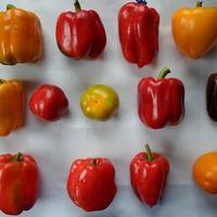 Про перцы и помидоры. Что я сажала.