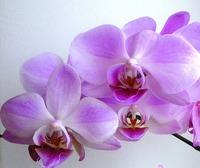 Отдам в заботливые руки комнатные цветы!