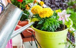 Как выбрать лейку для полива комнатных цветов?