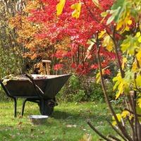 Осенние дела огородников