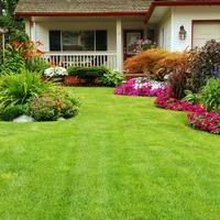 Учимся выращивать и оформлять газон