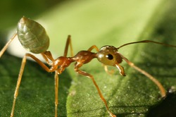 Простой способ избавиться от муравьёв на участке.