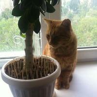 Про кота и про рассаду