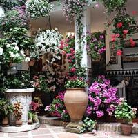 Подвесной цветник: как сделать, что посадить