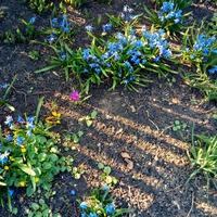 Весна... весна!!! Бушуют первоцветы!