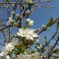 15 апреля, фоторепортаж из нашего сада.