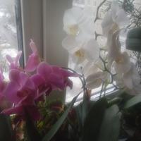 Как я ухаживаю за своими любимыми орхидеями!
