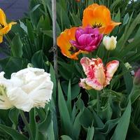 Моя весна, цветочки... серия 3