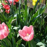 Моя весна, цветочки... серия 2