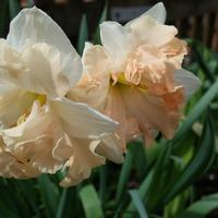 Моя весна, цветочки... серия 1
