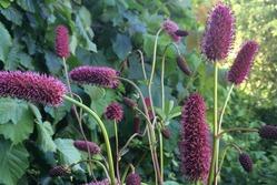 «Приручаем» дикие растения