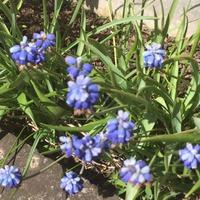 Голубая весна