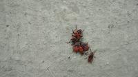 Неизвестные жуки!