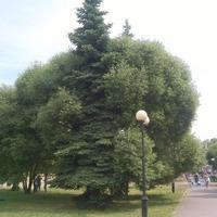 Август в городе пророчества Маяковского