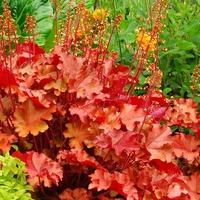 Лучшие растения для уличных кашпо