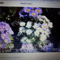 Асиендочки, помогите найти цветочки
