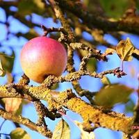 Как подготовить плодовые деревья к зиме