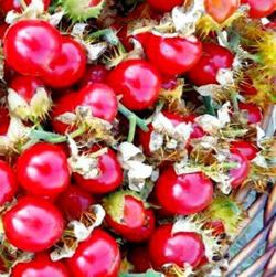 Необычные помидорки с колючками