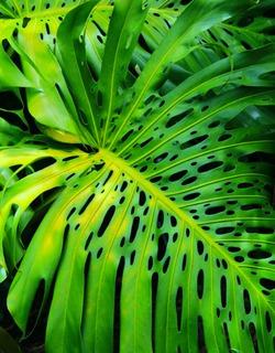 Дождевая влага для растений. Тропики