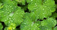 Дождевая влага для растений. Пустыня