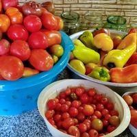 Урожай томатов 2018. (делать ли пост по сортам?)